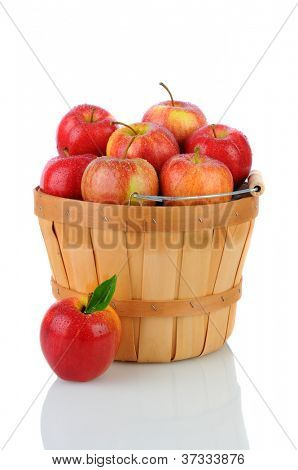 A basket full of fresh picked Gala Apples. Vertical format over a white background with reflection.
