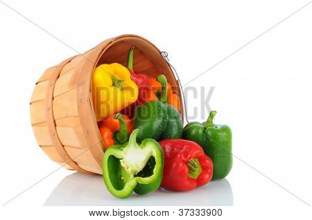 A basket full of fresh picked bell peppers on it s side spilling onto the surface. Horizontal format over a white background with reflection.