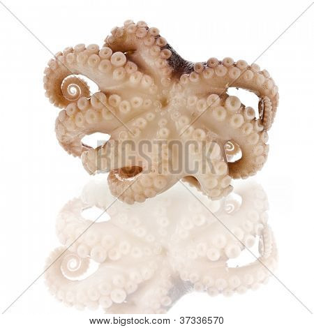 Small octopus isolated on white background