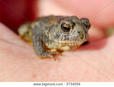 Toad In The Hand