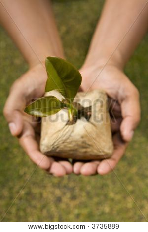Plant This Tree Seed