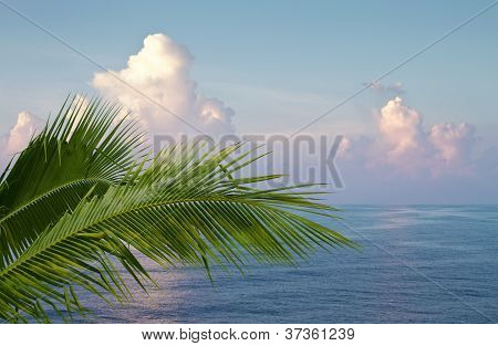 Palm And Ocean