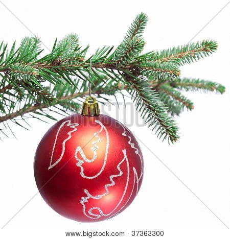 Christmas ball on fir branches. Isolated on white.