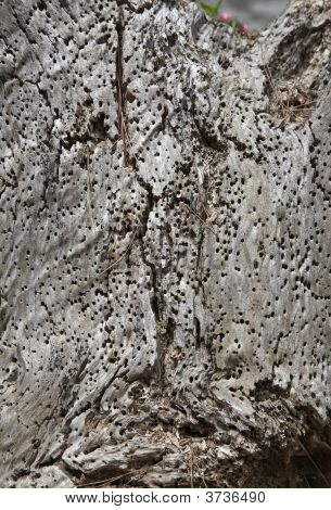 Wormholed Wood Texture