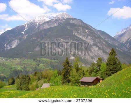 Alpine Meadow In Spring In Austrian Alps
