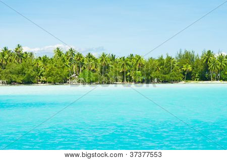 Paradise colors