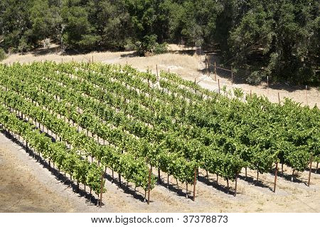 Secluded Vineyard
