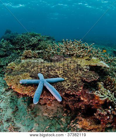 blue composed starfish