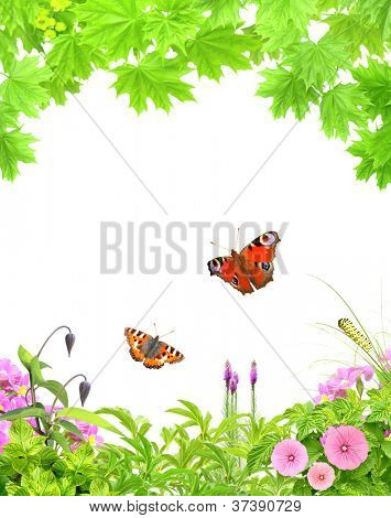Summer frame with green leaves, flowers and insects. Isolated over white