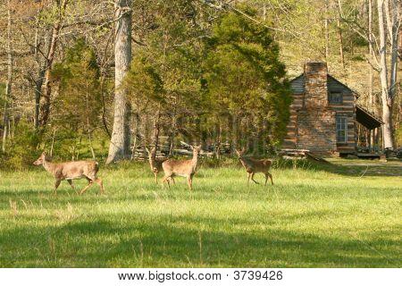 Field Of Deer
