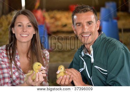 Cheerful couple of duck breeders holding baby ducks