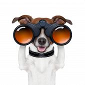 stock photo of observed  - binoculars dog searching looking and observing and watching - JPG