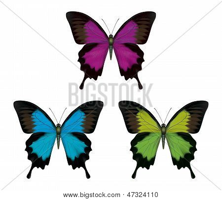 Butterfly detailed illustration