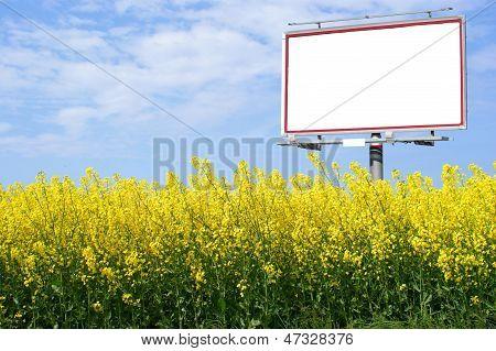 Billboard branco em branco em um campo de colza