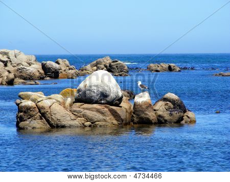 A Gull And A Rock