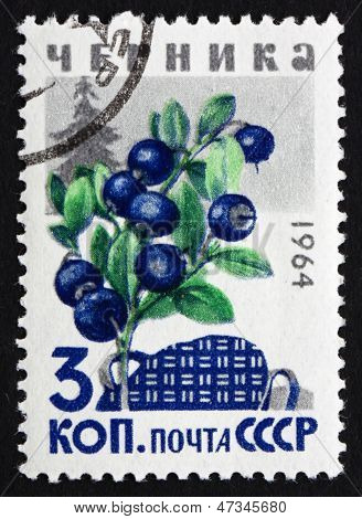 Postage Stamp Russia 1964 Huckleberries, Billberries