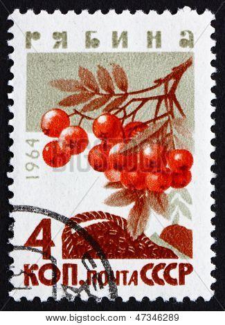 Postage Stamp Russia 1964 Mountain Ash, Rowan, Deciduous Tree