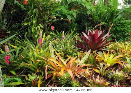 Bromeliad Garden.