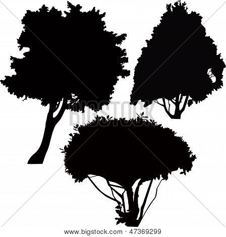 vector trees bushes isolated
