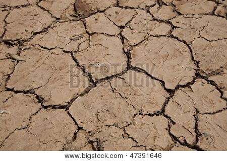 Close up view of dry cracked soil