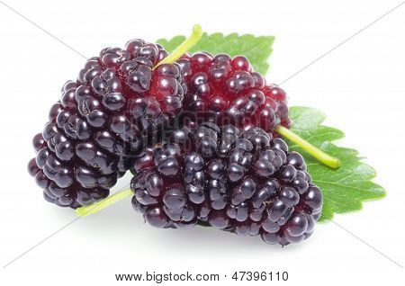 Ripe Mulberries.