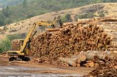 stock photo of track-hoe  - Track loader and operations in the log yard at a conifer log mill near Roseburg Oregon