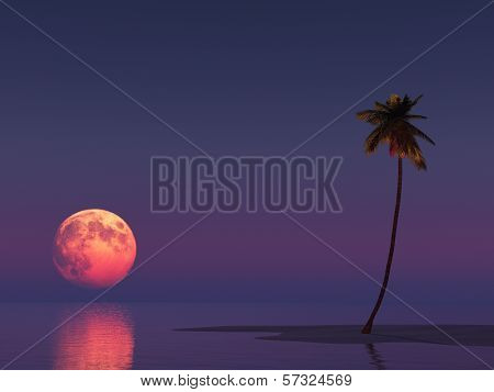 Landscape With The Moon And A Palm