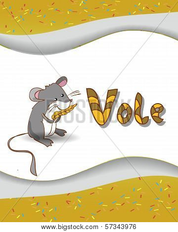 Animal alphabet letter V and vole