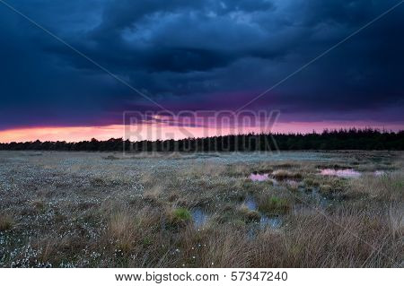Stormy Sunset Sky Over Swamp With Cottongrass