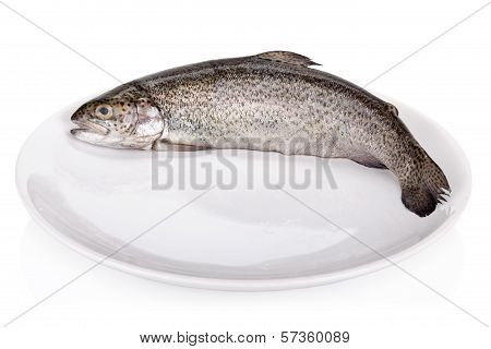 Rainbow Trout Isolated On White Background