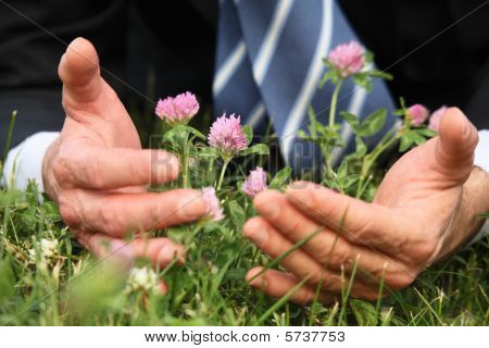 Man's Hands, Grass, Clover Flowers, Close-up