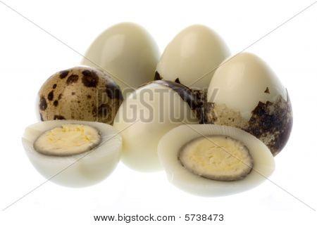 Quail's Eggs Isolated