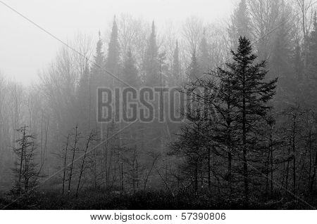 Northwoods Bog