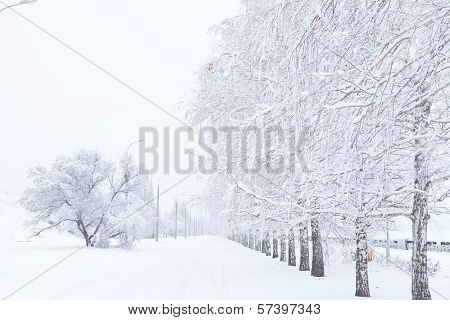 Winter alley of trees covered with white snow