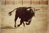 picture of bullfighting  - Pencil drawing on a linen of a brave bull to the gallop in a bullfight - JPG