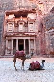 stock photo of treasury  - Camels rest in front of the treasury building at Petra - JPG