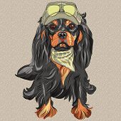 image of khakis  - Hipster red dog Cavalier King Charles Spaniel breed in cap and cravat khakis and glasses - JPG