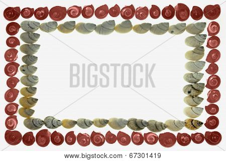 Frame Of Pink Umbonium Seashells And  Moon Snail Shells