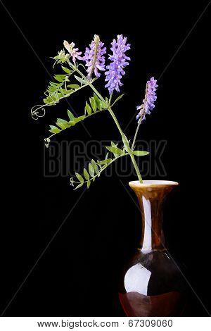 Alfalfa In Vase