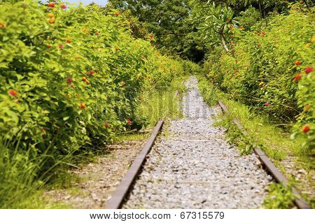 The abandoned railroad