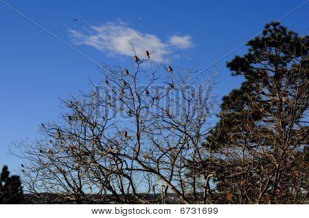 Full Bird Tree