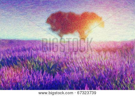 Original oil painting of lavender fields on cardboard. Sunset landscape.Modern Impressionism