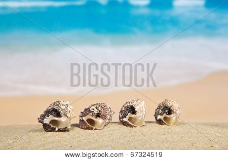 Beautiful sea cockleshells
