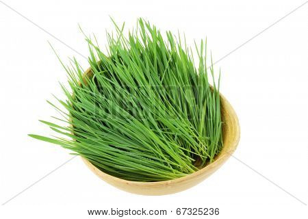 Closeup of freshly cut Wheatgrass in a wooden bowl, isolated on white background