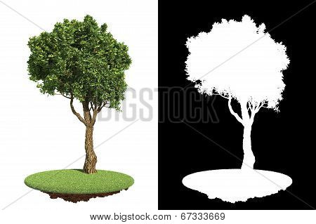 Green Tree Isolated on White Background.