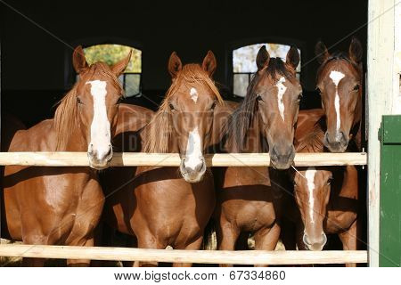 Horses in the barn
