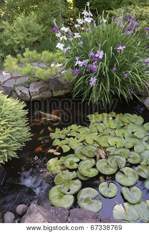Koi Pond With Irises