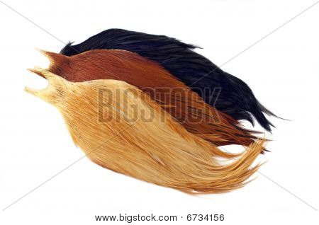 Rooster Cape