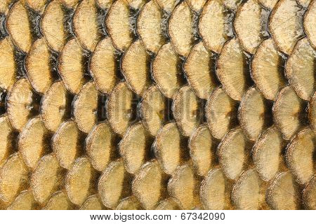 Natural background from fish scales (The Common Carp - Cyprinus Carpio).