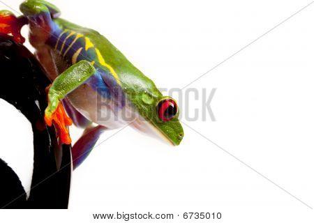 Green Frog Watching